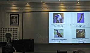 Maia Willson talks about Birds