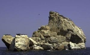 Socotra Cormorants in the Straits of Hormuz