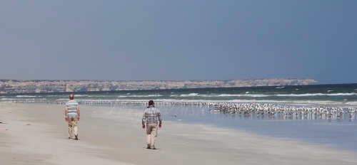 Beach with Gulls and Terns in Oman